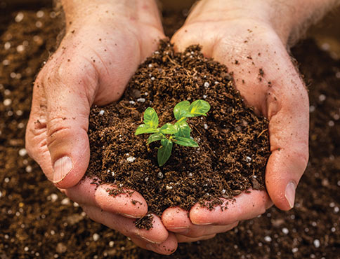 Hands holding soil and sprouting plant.